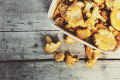Chanterelles in a basket Stock Photo