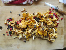 Chanterelles and berries. Freshly picked chanterelles, blueberries and wild strawberries Royalty Free Stock Photos