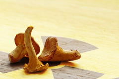 Chanterelles on a board with the symbol for radioactivity Royalty Free Stock Photo