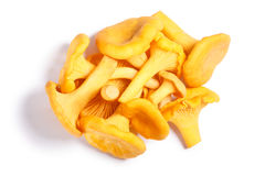 Chanterelles Cantharellus cibarius mushrooms, paths, top view. Pile of Chanterelles or girolles mushrooms Cantharellus cibarius, top view. Clipping paths, shadow royalty free stock photos