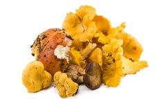 Chanterelles, champignons frais Image libre de droits