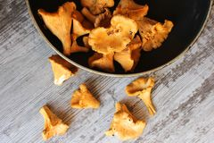 Chanterelles. Fresh chanterelles in the pan and on the table royalty free stock photos