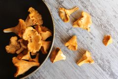 Chanterelles. Fresh chanterelles in the pan and on the table. Selective focus stock photo