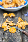Chanterelles fresh from the woods Stock Photos