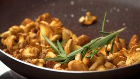 Chanterelles in a frying pan. stock footage