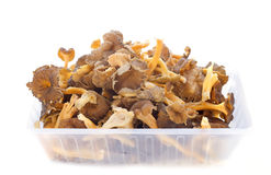 Chanterelles Royalty Free Stock Photography