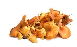 Chanterelles. Handful of yellow chanterelles  mushrooms izolated with white color Stock Photos