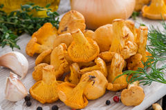 Chanterelles and ingredients for cooking on wooden board Stock Images