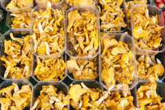 Chanterelles. Market in Forcalquier, Provence, France Royalty Free Stock Images