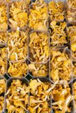 Chanterelles Royalty Free Stock Photos