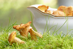 Chanterelles in moss and gravy boat for mushroom ragout Royalty Free Stock Photos