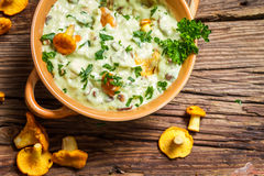 Chanterelles mushroom with cream and parsley are in the forest. On old wooden table Royalty Free Stock Photography
