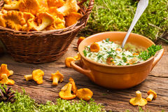 Chanterelles mushroom with cream and parsley are in the forest Royalty Free Stock Images