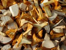 Chanterelles and mushrooms. Chopped mushrooms ready for cooking Stock Photo