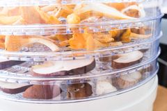 Chanterelles and porcini mushrooms in the dehydrator. Chanterelles and porcini mushrooms slices in the dehydrator organized in layers stock image