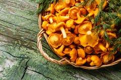 Chanterelles sauvages crues de champignons dans le panier image stock