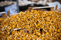 Chanterelles selling in a market Royalty Free Stock Photography