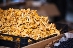 Chanterelles selling in a market Stock Photo