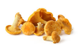 Chanterelles on white background Stock Photo