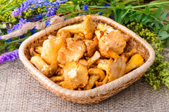 Chanterelles and Wildflowers Royalty Free Stock Image