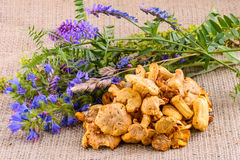 Chanterelles and Wildflowers Royalty Free Stock Photography