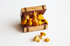Chanterelles in a wooden box Stock Photo