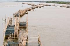 chanthaburi gospodarstwa rolnego ryba rzeka Thailand Zdjęcia Stock