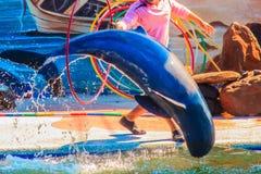 Chanthaburi, Thailand - 5. Mai 2015: Trainer unterrichtet Delphin Stockbild