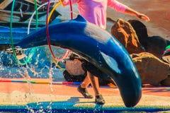 Chanthaburi, Thailand - 5. Mai 2015: Trainer unterrichtet Delphin Lizenzfreies Stockfoto