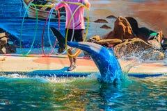 Chanthaburi, Thailand - 5. Mai 2015: Trainer unterrichtet Delphin Lizenzfreie Stockfotos