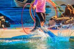 Chanthaburi, Thailand - 5. Mai 2015: Trainer unterrichtet Delphin Lizenzfreie Stockfotografie