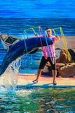Chanthaburi, Thailand - 5. Mai 2015: Trainer unterrichtet Delphin Stockfoto