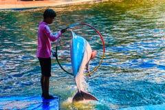 Chanthaburi, Thailand - 5. Mai 2015: Trainer unterrichtet Delphin Stockfotos