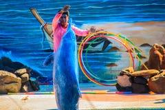 Chanthaburi, Thailand - 5. Mai 2015: Trainer unterrichtet Delphin Lizenzfreies Stockbild
