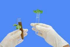 Échantillons d'eau propres et modifiés avec frais et le wilte Photos stock