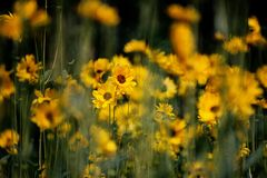 Chaos of yellow flowers. And blooms Royalty Free Stock Image