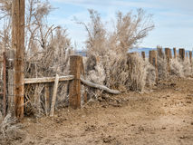 Chaotic fenceline. Desert fence is bounded by sage and brush Royalty Free Stock Images