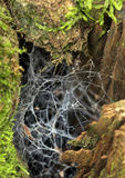 Chaotic spider web Royalty Free Stock Photography