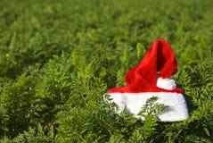 Chapéu de Santa em um campo de exploração agrícola Fotografia de Stock