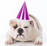 Chapéu desgastando do aniversário do cão imagem de stock royalty free