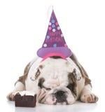 Chapéu desgastando do aniversário do cão foto de stock royalty free