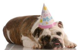Chapéu desgastando do aniversário do cão fotos de stock royalty free