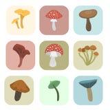 Chapéu diferente do vermelho da ilustração do vetor do projeto do estilo da arte do fungo dos cartões dos cogumelos do cogumelo v ilustração stock