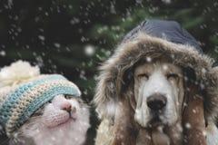 Chapéu do cão e gato na queda de neve Imagem de Stock Royalty Free