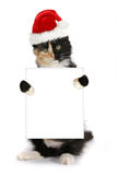 Chapéu do Natal de Kitten Holding Blank Sign Wearing imagens de stock royalty free