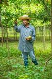 Chapéu vestindo do fazendeiro que pegara o fruto de paixão fotos de stock