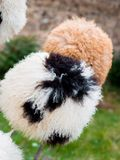 Chapéus forrado a pele feitos de lãs dos carneiros em Mtskheta, Geórgia imagens de stock royalty free