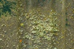 Chapa con los rastros de musgo verde imagenes de archivo
