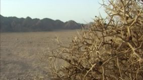 Chaparral in de Sinai woestijn Egypte stock video