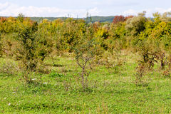 Chaparral in den Herbstkaukasierbergen stockfotos